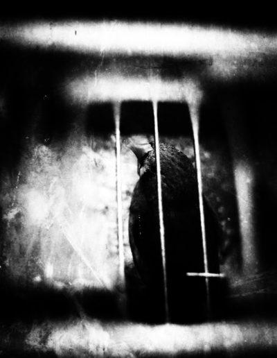 Les oiseaux en cage - Birds in cage, 2018