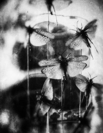 Les Papillons Noirs 2 - Black butterflies 2, 2018